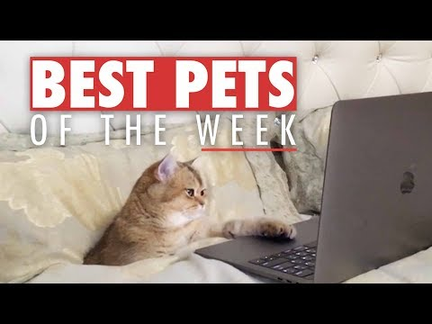 Best Pets of the Week | November 2017 Week 1