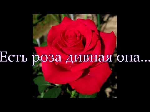 Есть роза дивная... Пушкин Александр Сергеевич