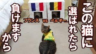 【負けの神】準決勝フランスvsベルギー負けの神悪魔の選択The person who chose loses it Devil's cat