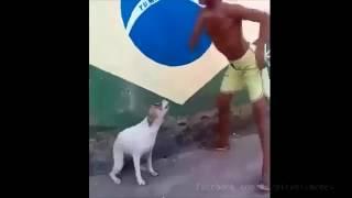 Собака танцует в ритм со своим хозяином