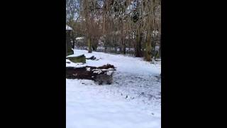 Cairn Terrier Jumping In Snow