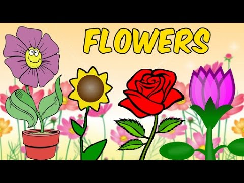 Names Of Flowers With Pictures In Hindi Hindi Lessons For Kids