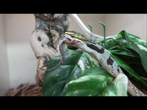 A Visit with the Twig Snakes
