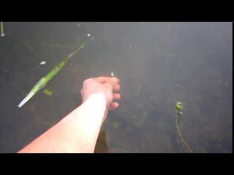 Guy Catches Giant Bass With One Hand