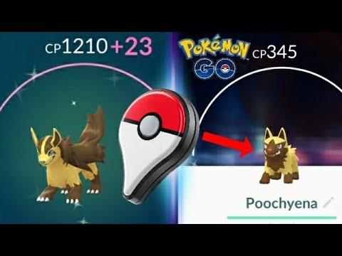 Download Youtube: GO+ A SHINY POOCHYENA + EVOLVED INTO MIGHTYENA - POKEMON GO