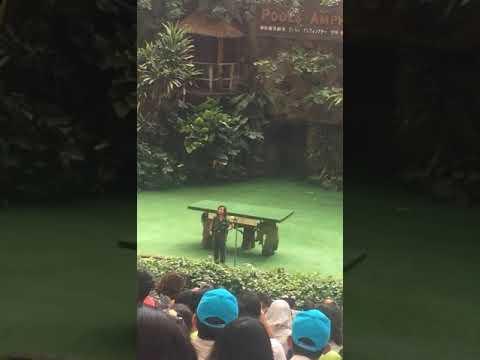 Travel in Singapore: Bird Park