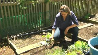 How to Raise Romaine Lettuce : Planting & Gardening Vegetables