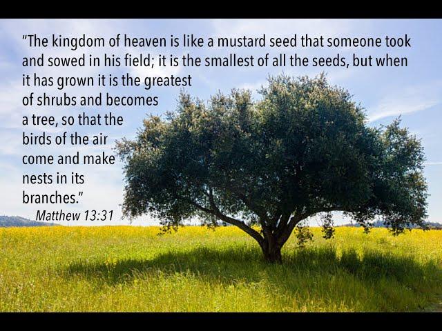 SUN JAN 31,2021 Like A Seed