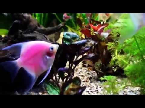 рыб фото личинки
