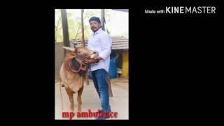 Jallikattu Mp Ambulance sevalai