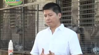 AGRITV RACING PIGEON Kerby Chua