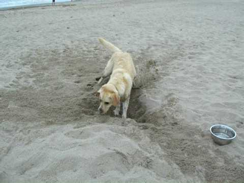 Dog Digging In Sand Youtube