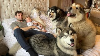 Our Morning Routine With 3 Giant Dogs A Cat And A Baby!! (So Much Fluff!!)