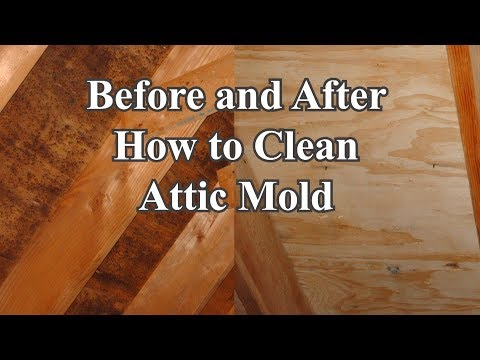 Clean Attic Mold