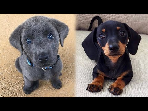 Cute Puppies Doing Funny Things, Cutest Puppies in the Worlds 2021 ♥ #1 Cutest Dogs