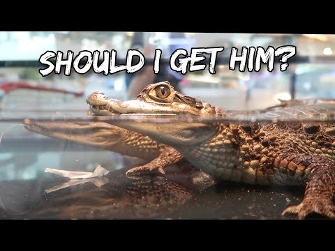 NEED YOU FEEDBACK - SHOULD I GET IT? (Aquafiesta 2018)   Vlog #137