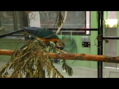 Singapore Jurong bird park incubation area