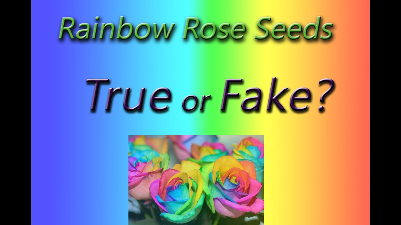 rainbow rose seeds is it a fake 1 youtube