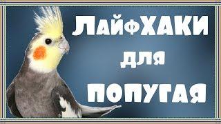 ЛайфХАКИ для попугая #4. Лайфхак для копошилки.