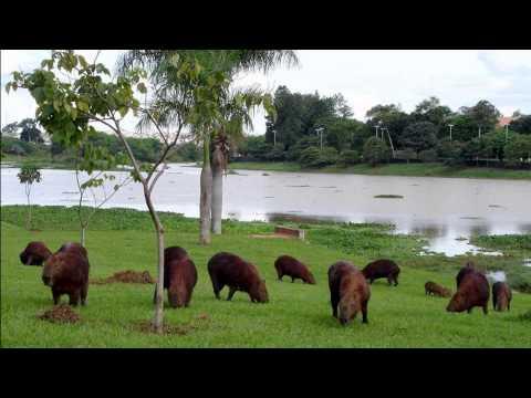 Mato Grosso - Brazil (HD1080p)