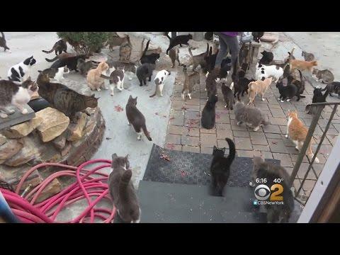 Long Island Cat Sanctuary