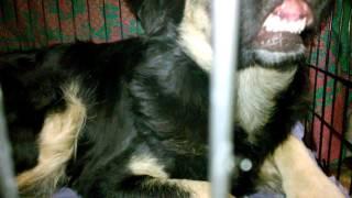 3. Молодая собака со стоянки ( после стерилизации)