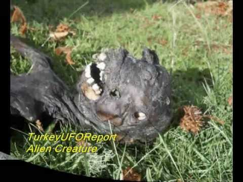 2013 NEW ALIEN CREATURE-REAL FOOTAGE-SOUTH AFRICA - YouTube Real Alien Footage 2013