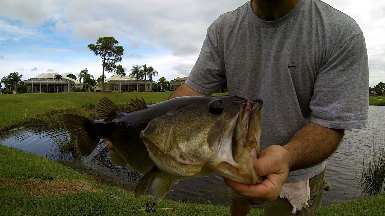 Bass fishing giant florida golf course pond bass youtube for Bass fishing ponds