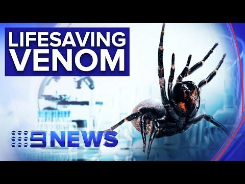 Venom Of Deadly Funnel Web Spider Could Treat Heart Attacks | Nine News Australia