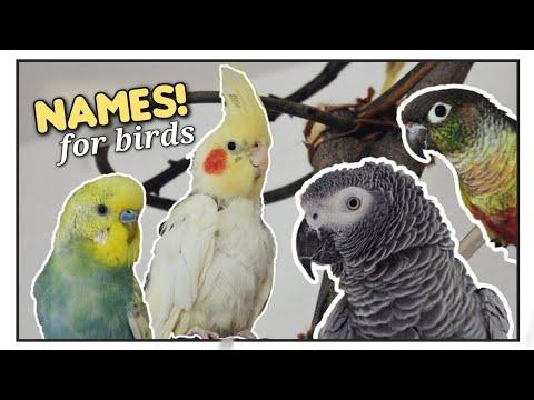 (๑˃ᴗ˂)ﻭ The Most POPULAR Parrot Names!