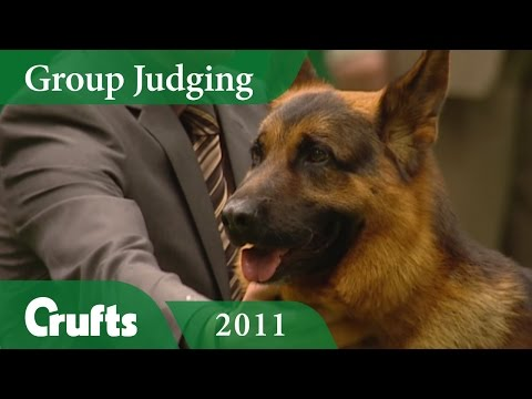 German Shepherd Dog Wins Pastoral Group Judging at Crufts 2011 | Crufts Classics
