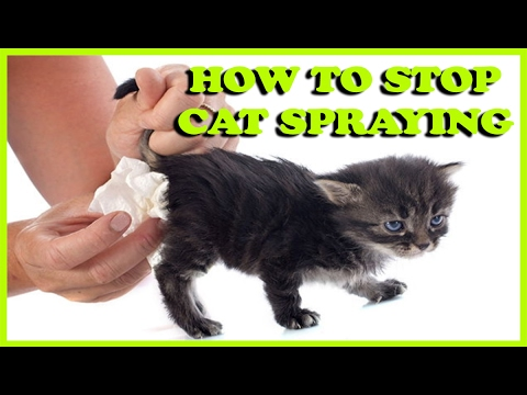 how to stop my cat from spraying in the house cat spraying how to stop a cat from spraying. Black Bedroom Furniture Sets. Home Design Ideas