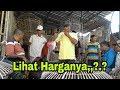 Lihat Para Botoh Memilih Ayam Bangkok Berkuwalitas Unggul.