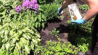 Многолетние цветы в саду. Уход за цветником и подкормка летом - 7dach(Многолетние цветы украшают наш сад весь сезон. Для того, чтобы они выглядели декоративно, им требуется уход..., 2016-07-04T06:22:47.000Z)