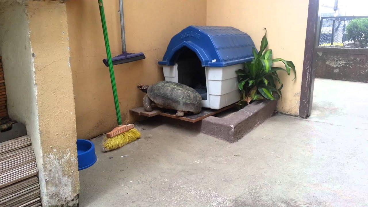 tartaruga ninja quer ser cachorro dominou a casinha do