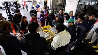 姫路でシンコ漁始まる