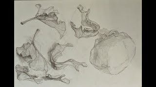 Уроки скульптуры и рисунка: наброски и рисунок черепа человека, часть 1