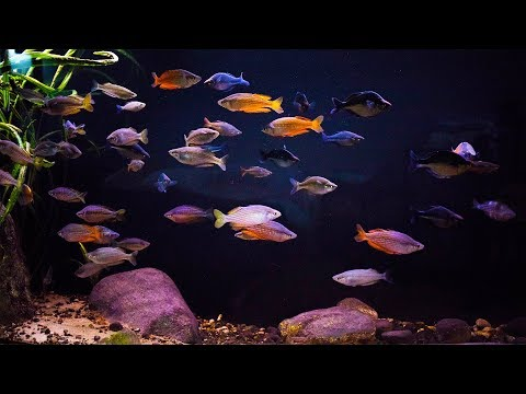 Fish Room Tour ! L.R.Bretz's Aquatics Part 2 !