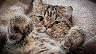 Кота посадили на диету и тут началось как кот выбивал калории