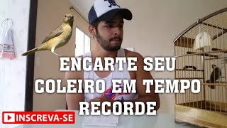 Encarte de Coleiros pardos mais facil/video explicativo! INSCREVAM-SE