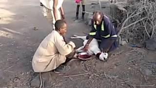 Turkana - Kenya people Drinking Blood of Goat
