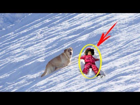 Все были в изумлении, когда увидели, кого тащил по снегу лабрадор. Оказывается это был пропавший...