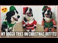 MY DOG TRYS ON CHRISTMAS OUTFITS!    Lacey Jane
