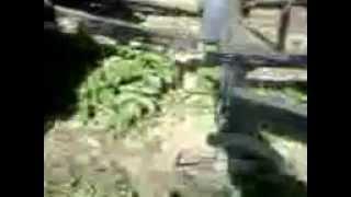 прополка картошки(, 2014-05-29T12:25:41.000Z)