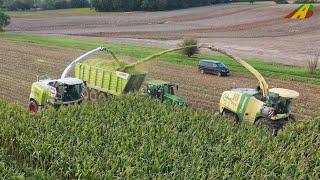 Großeinsatz Maishäckseln 2019 - Krone BigX 850, Claas Jaguar 970 farmer corn harvest Maisernte