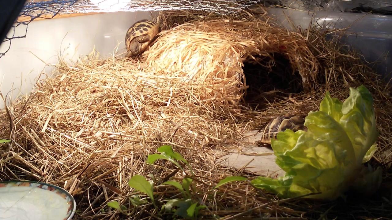 Baby testudo hermanni hermanni terrario youtube for Accessori per terrario tartarughe