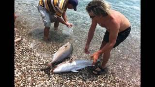 kankalardan akya balığı avı (bölüm2) AVmarketicom