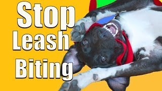 How To Stop PUPPY BITING on a Leash!