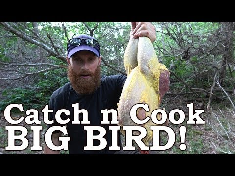 Catch and Cook GIANT Wild BIRD & Mullberries! Ep04 | 100% WILD Food SURVIVAL Challenge!