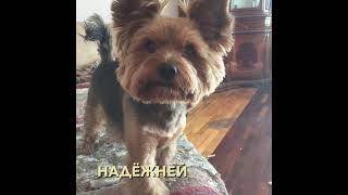 Собака в вашем доме - это к счастью!